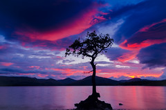 Loch Lomond at Sunset (samueljohnkerr) Tags: sunset tree landscape lochlomond