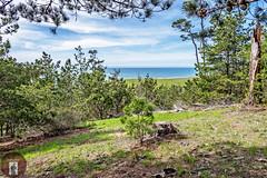 California Central Coast (randyandy101) Tags: beach bigsur bluesky bigsurhighway blue californiacentralcoast cambria cambriaca california cambriapinesbythesea coast clouds coastline cliffs pine trees forest green fiscaliniranchpreserve
