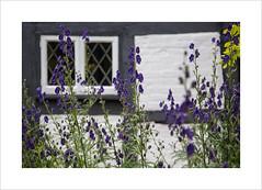 The Wayfarer's Walk (andyrousephotography) Tags: wayfarerswalk alresford walk friends friendship dayout riveralre cottage picturepostcard garden flowers canon eos 5d mkiii