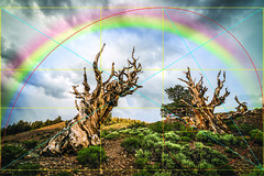 Golden Ratio Ancient Bristlecone Pines Rainbow! Sony A7RII Elliot McGucken Fine Art Landscape Photography! (45SURF Hero's Odyssey Mythology Landscapes & Godde) Tags: art lens t landscape spiral photography golden rainbow ancient angle cut dr sony fine wide wideangle divine pines rainbows fe elliot za rectangle section f4 a7 bristlecone ratio oss goldenspiral 1635mm mcgucken variotessar a7r a72 emount sonya7rii a7rii a7r2 sonya7r2 sonya7riisony1635mmvariotessartfef4zaossemountlensdrelliotmcguckenfineartphotographywideangle