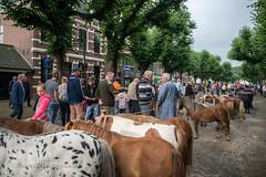 070fotograaf_20160728_027.jpg (070fotograaf, evenementen fotograaf) Tags: 070fotograaf 2016 juli paarden paardenmarkt voorschoten