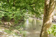 DSC_2390-HDR (Pascal Gianoli) Tags: beauval zoo zooparc saintaignansurcher centrevaldeloire france fr pascal gianoli pascalgianoli