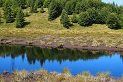 tükröződés / reflection (debreczeniemoke) Tags: nyár summer láp bog tőzegláp muskeg tăulchendroaiei tó pond kék blue tópart lakeside gutinhegység gutinmountains erdő forest fa tree olympusem5
