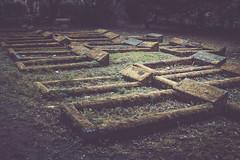 the big sleep (I AM JAMIE KING) Tags: life cemetery graveyard death moss headstone graves lichen