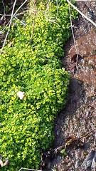 Frühlingserwachen im schönen Wiesental (saahiradancer) Tags: priska schwarzwald schopfheim 2015 nieke bauchtänzerin saahira frühlingstagundnachtgleiche