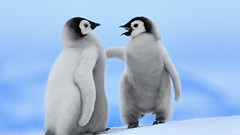 Cute Baby Penguin Wallpaper Free Download (wallsauto) Tags: wallpaper baby cute penguin free download