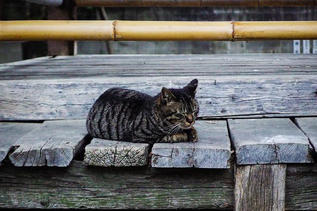 Today's Cat@2015-04-01