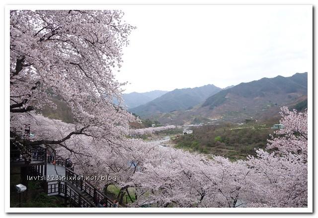 화개십리벚꽃길31