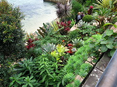 Gingie - looking down over the terrace (stitchingbushwalker) Tags: opengardens gingie