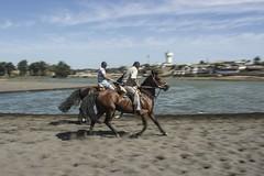 Cabalgando en la arena (jorquera.oscar) Tags: horse lake beach movement sand rider