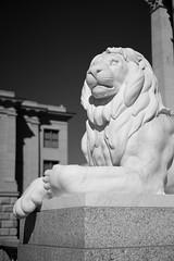 Lion (Tim Devine Photography) Tags: utah capitol saltlakecity sonya7r sonyfe55mmf18zacarlzeisssonnart