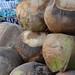 Coconuts in Puerto Nuevo, Mexico