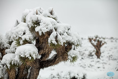 0223 IMG_3095 (JRmanNn) Tags: snow lasvegas bluediamond springmountains coolerdays coolingdown beattheheat