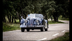 Jaguar XK 140 Roadster (1954) (Laurent DUCHENE) Tags: jaguar roadster 140 xk 2016 tourauto peterauto saintvictorlacoste