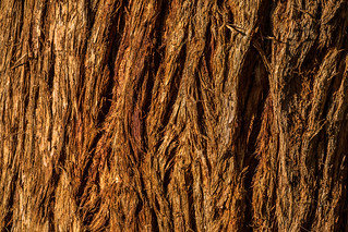 Eucalyptus Tree Texture - Happy Macro Monday