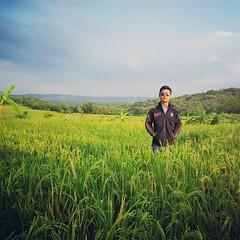 Di Sawah (Octaff Muhammad) Tags: blue sky green padi sawah langit beras kebun rumput