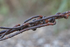 Barbed wire 7.6.16 (jrbeckwith) Tags: 2016 picture photo jr beckwith jbeckr fortworth texas tx macro barb barbed wire outside protect