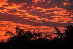 Winter sunrise, Kerikeri, New-Zealand (kevin2367) Tags: sunrise levdesoleil landcape paysage newzealand bayofislands northisland northland instagramkevin23230 kevinfernandez sky trees canon500d kerikeri clouds travelphotography