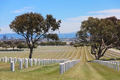 as far as the eye can see (Karol Franks) Tags: california ca freedom peace military rip headstone final fallen burial soldiers restingplace fighters veterans toomany sanbruno endless goldengatenationalcemetery asfarastheeyecansee