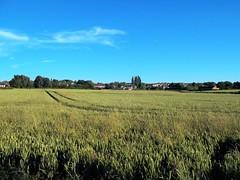 kirkby in ashfield (kelvin mann) Tags: kirkbyinashfield kirkby ashfield sky field nottinghamshire notts