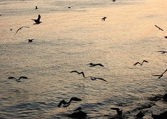 dawn by the river (*F~) Tags: lisboa seagulls golden water 2007 time thehours river tejo tagus lookingback retrospective dawn