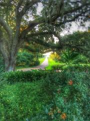 Rip Van Winkle Gardens Jefferson Island Louisiana Antebellum Home Mansion History 111L7R (Dallas Photoworks) Tags: rip van winkle gardens jefferson island louisiana subtropical lush