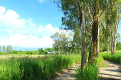 IMG_9464 -  Nam Sang Wai (Mak_Ho) Tags:  namsangwai  yuenlong  newterritories  lemoneucalyptus  vegetation  tree  leaf  grassland  scenic  scenicphoto  scenicsites  scenicspot  nature  natureenvironment  photography   hike  canon 700d hongkonglandscape  hongkong landscape