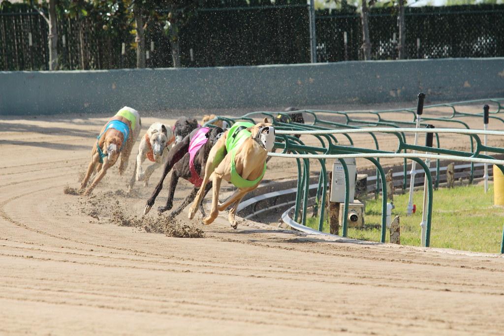 west memphis casino dog track