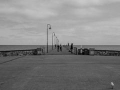 Glenelg Jetty (Anthony's Olympus Adventures) Tags: adelaide south australia glenelg jetty pier sea ocean water beach gulfstvincent midday outdoor city panorama tree olympus em10 omd microfourthirds seaside view blackandwhite seagull photobomb
