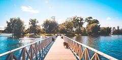 (areg.j) Tags:   saintpetersburg  bridge peterhof