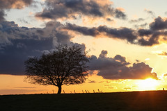 Here comes the rain (Guido Bl.) Tags: landscape landschaften sonnenuntergang sun nature tree sky clouds lightning