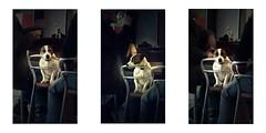 Serie du 27 02 16 : Concarneau (basse def) Tags: bar concarneau dogs