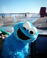 Cookie monster on tour (pamelaadam) Tags: instagramapp square squareformat iphoneography uploaded:by=instagram thebiggestgroup fotolog digital phonecam autumn october 2016 sea toy cookiemonster fraserburgh aberdeenshire scotland