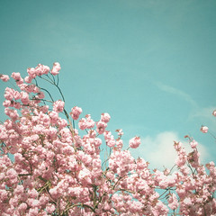 A Moment in Time (_cassia_) Tags: flowers white tree nature floral beautiful clouds print photography spring pretty blossom turquoise bluesky etsy folksy candycolours pastelpink candypink pastelcolours pastelblue cassiabeck