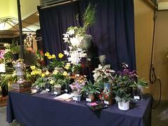 Santa Barbara International Orchid Show (cieneguitan) Tags: flower flora land bunga orkid okir angrek anggerek
