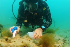 Sydney Harbour research (ABC News) Tags: ocean marine harbour sydney science research unsw