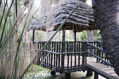 Des Palais de jungles (mohamedredaly1) Tags: new people favorite feet public canon plante square wonder this jones photo search nikon eau flickr im d70 you c s tags any follow safety national add f level page format info safe member thumbnail nikkor viewing navigation feedback jardins app commenting comment d3 additional facebook provide d4 d60 d610 youtube d90 d80 28d d810 d700 d7000 iphoneography giographic twittertuesday instagram 5555550199examplecom