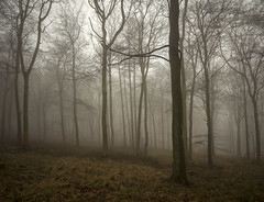 Enjoy the Silence (Damian_Ward) Tags: wood morning trees mist misty fog chilterns foggy beech thechilterns chilternhills damianward ©damianward forestwendoverwoodsastonhill wendoverbuckinghamshirebuckschilterns