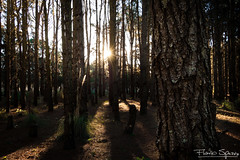 Enrejado de madera (FlavioSpezia) Tags: wood sun tree sol forest arbol madera bosque d40