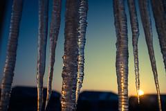 Jagged Beauty (espressoDOM) Tags: cold beauty sunrise gg colorado freezing icicle castlerock fav10 isawthis