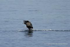 Popy_2010_055 (Juanjo Gomez) Tags: sea beach mar mediterraneo formentera juanjo baleares cormoran juanjogomez juanjosegomeztercero