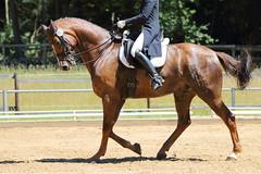 IMG_4600 (dreiwn) Tags: horse pony horseshow pferde pferd equestrian horseback reiten horseriding dressage reitturnier dressur reitsport dressyr dressuur ridingclub ridingarena pferdesport reitplatz reitverein dressurreiten dressurpferd dressurprüfung tamronsp70200f28divcusd jugentturnier