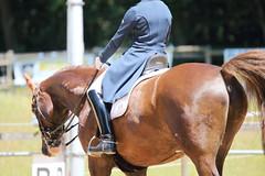 IMG_4897 (dreiwn) Tags: horse pony horseshow pferde pferd equestrian horseback reiten horseriding dressage reitturnier dressur reitsport dressyr dressuur ridingclub ridingarena pferdesport reitplatz reitverein dressurreiten dressurpferd dressurprfung tamronsp70200f28divcusd jugentturnier