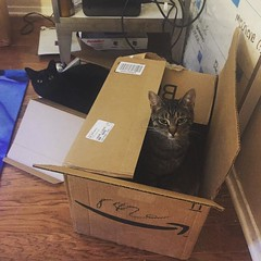 Successful day of cat catching in the office!  Isis and #cleocatra love their boxes. Great office buddies too. :P #meow #ififitsisits #catsofinstagram @amazon they're partial to your boxes  (ClevrCat) Tags: love cat office amazon day buddies great your catching meow p boxes their too isis theyre partial successful workfromhome cleocatra digitalnomad instagram ifttt catsofinstagram ififitsisits