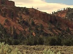 Canyon Rim (Rinny1959) Tags: brycecanyonnationalpark bryce park canyon red rock tree sky blue cloud clouds utah bush sage rim mountain hill view landscape kylesecretan
