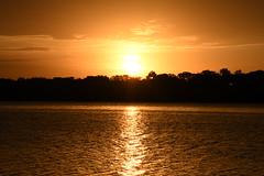Golden Sunrise (maggi_m21) Tags: 1680mm water lake gold d500 nikon kansas sunrise