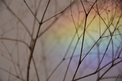 Impression (LidyvN) Tags: sprig twig red impression light hydrangea flower color grass prisma rainbow pastel