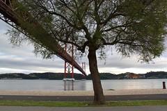 Ponte 25 de Abril (Jorge Laurentino) Tags: bridge tree river lisboa lisbon sombra ponte tejo ramo rvore ribeirinha