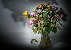 """""""At the end of the performance ... take a bow and leave the stage..."""" (Ian Johnston LRPS) Tags: flowers red roses yellow dead leaf flora purple stage bow vase dying ending perfmance"""