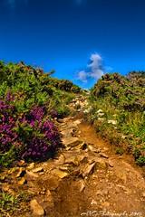 Trebeurden 22 (adelinegovinicolas) Tags: bretagne trebeurden fleur flowers violet vert paysage landscape beauty balade cote d armor perros guirec